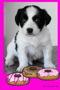 dogs and donut